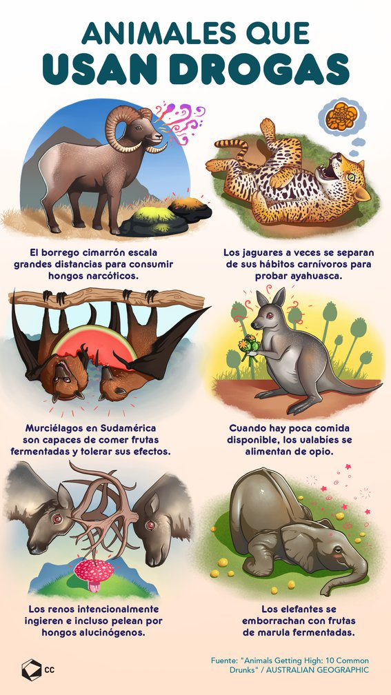 Animales que usan drogas