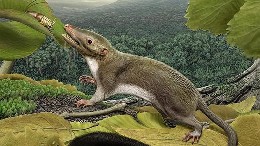 Genomas revelan que nuestros primeros ancestros comieron insectos