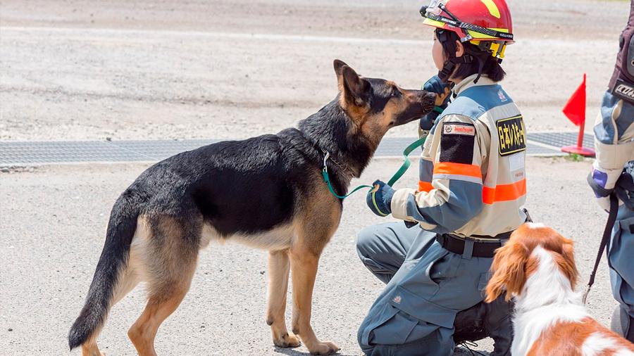 Una nariz química para buscar víctimas de desastres sin perros