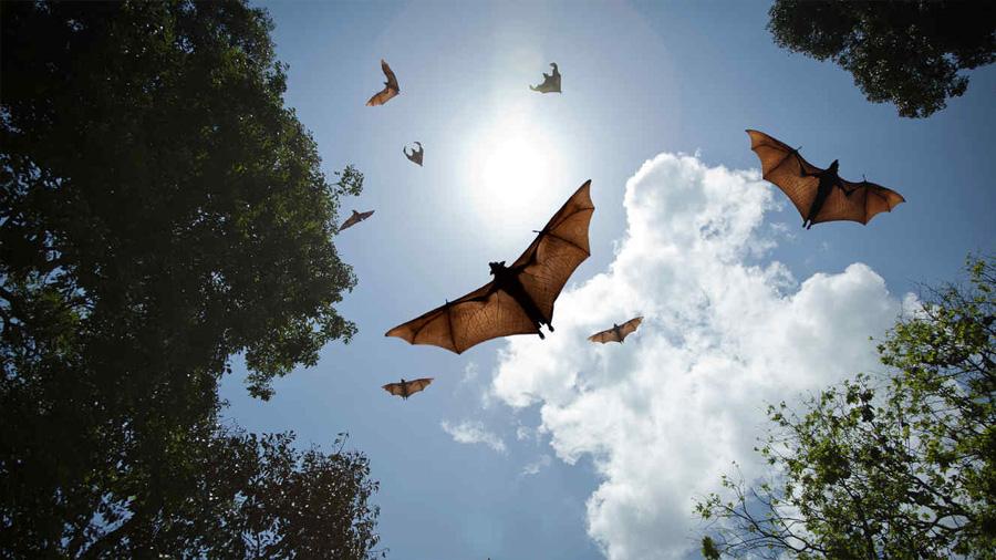 Cambió climático: el adelanto en migraciones de los murciélagos podría ocasionar enormes pérdidas agrícolas