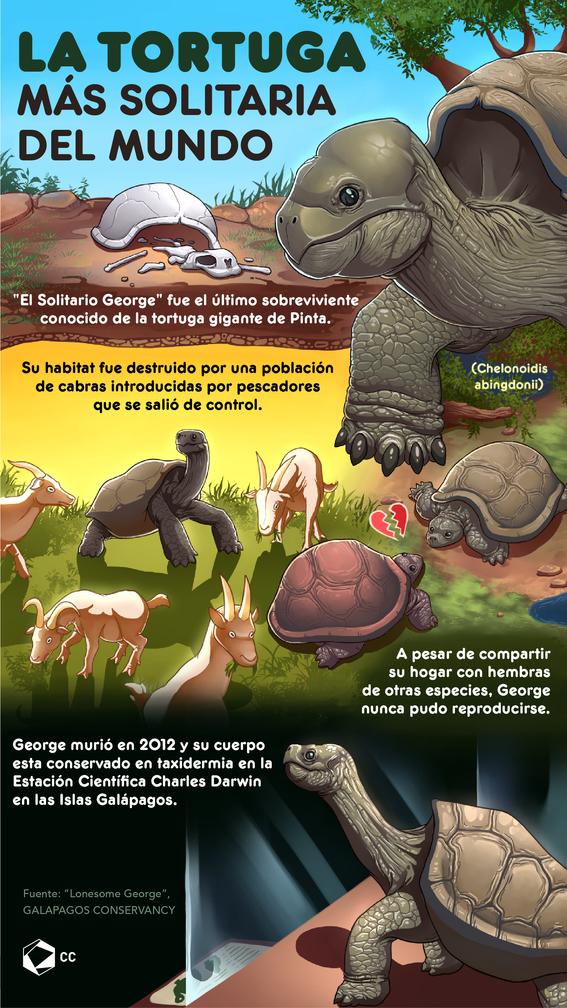 La tortuga más solitaria del mundo