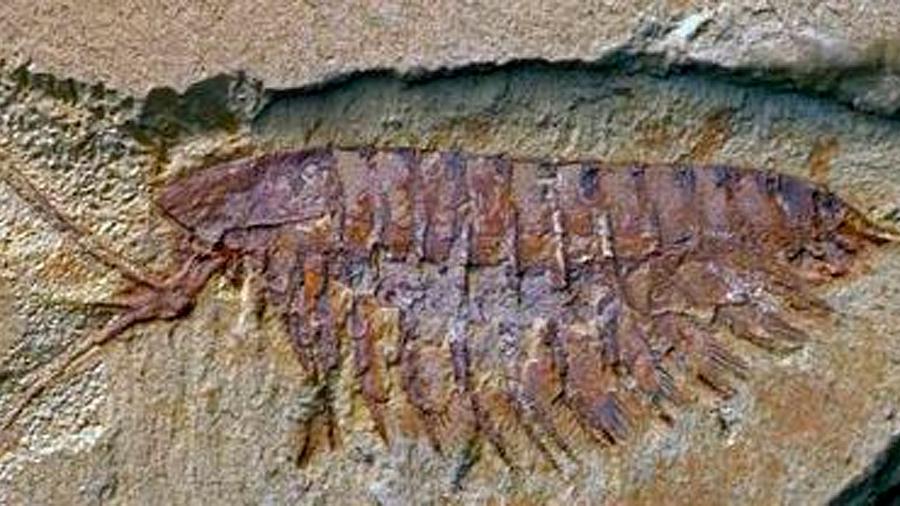 Vida animal de hace 540 millones de años desafía teorías evolutivas
