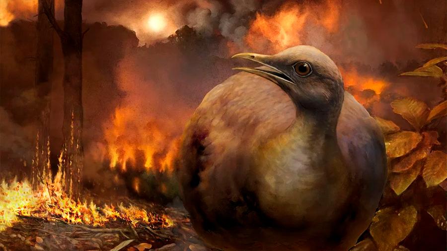 Aves de suelo se salvaron del evento que extinguió a los dinosaurios