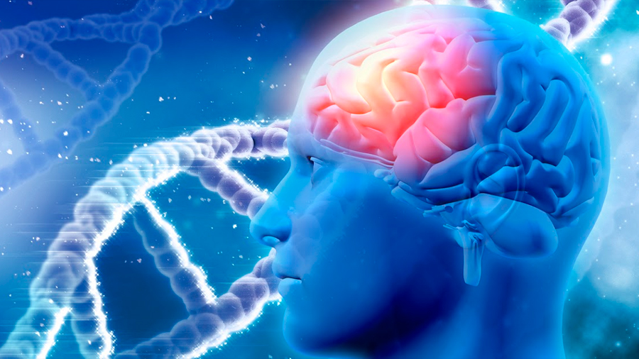 Identifican tres categorías de genes implicados en el desarrollo del alzhéimer