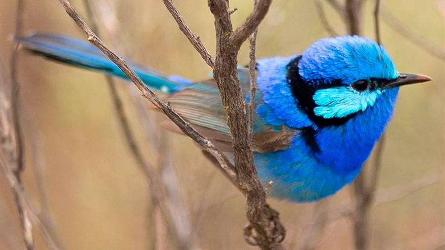 Pájaros de diferentes especies se reconocen y cooperan entre sí