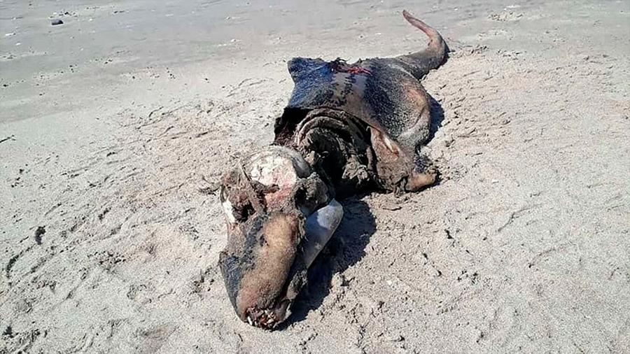 Aparece misteriosa criatura en una playa de Reino Unido y desconcierta a los científicos