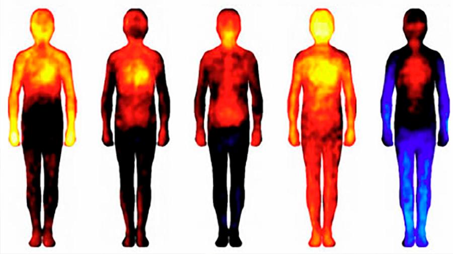 Descubren cómo una temperatura corporal alta combate mejor las infecciones y los tumores