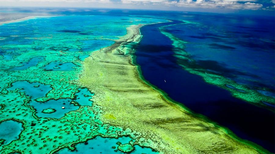 Dura de matar: la Gran Barrera de Coral ha regresado de la muerte hasta en 5 ocasiones