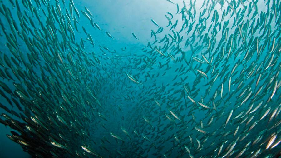 Centenares de especies de peces emigran al norte para escapar del cambio climático