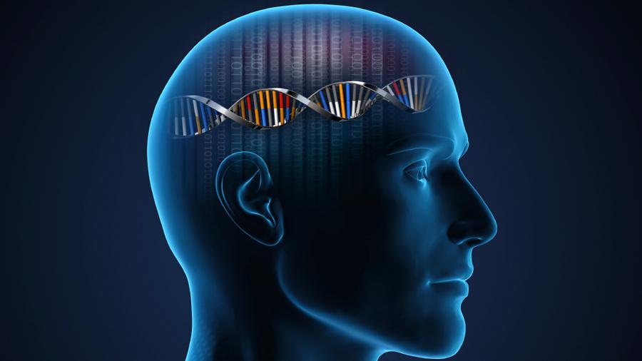 Descubren el secreto genético que potenció la inteligencia humana