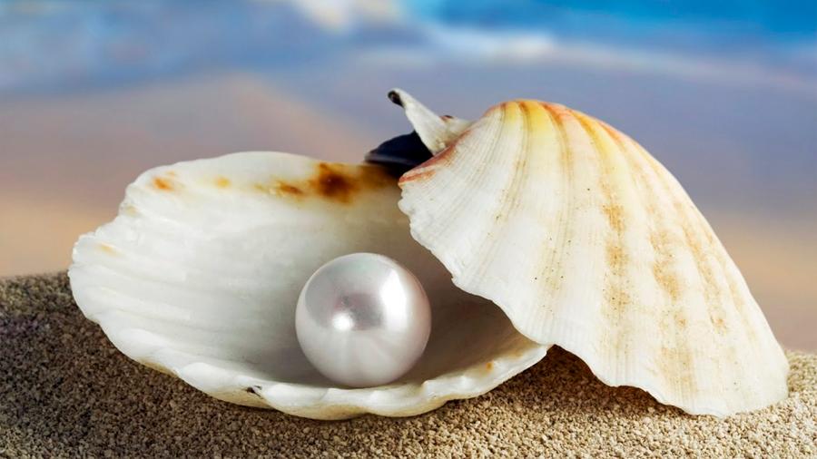 El sorprendente proceso que permite a las ostras hacer perlas