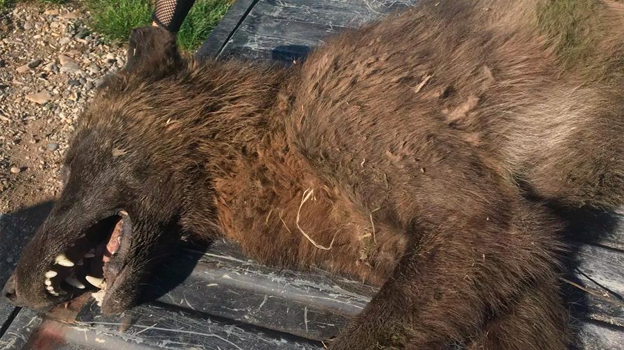 Matan a una criatura que acechaba al ganado y las autoridades no tienen idea de qué animal se trata