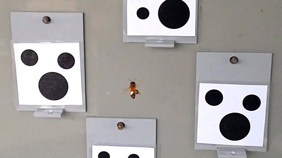 Descubren que las abejas saben lo que es el número cero