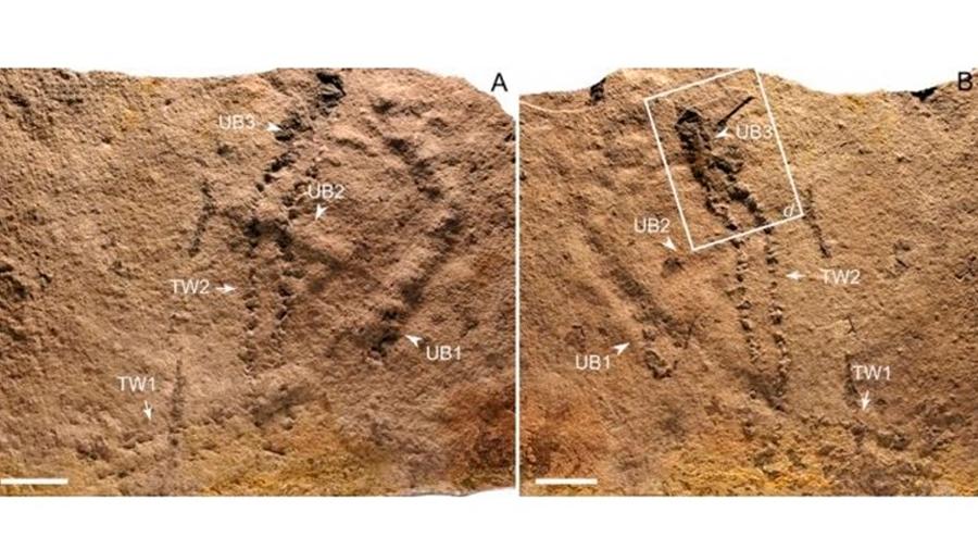Hallada en China la huella de animal más antigua de la Tierra: de hace 541 a 635 millones de años