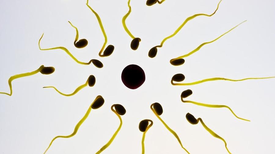 Descubren sustancia extra y atípica en el esperma que podría explicar la infertilidad y abortos espontáneos