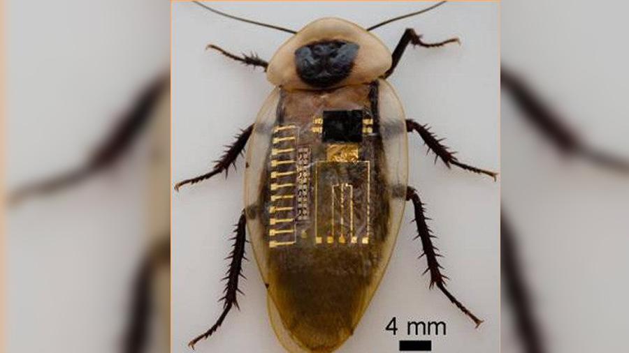 Logran nervios mecanosensoriales biológicos emulados por electrónica flexible