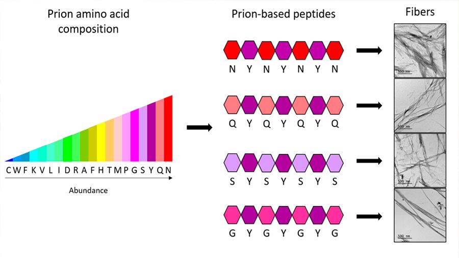 Logran obtener 'ladrillos' de aminoácidos para crear nanomateriales