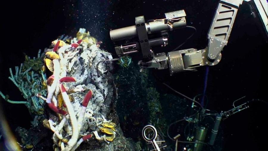 Sorprenden los microbios por productivos y vitales en la alimentación en profundidades del océano