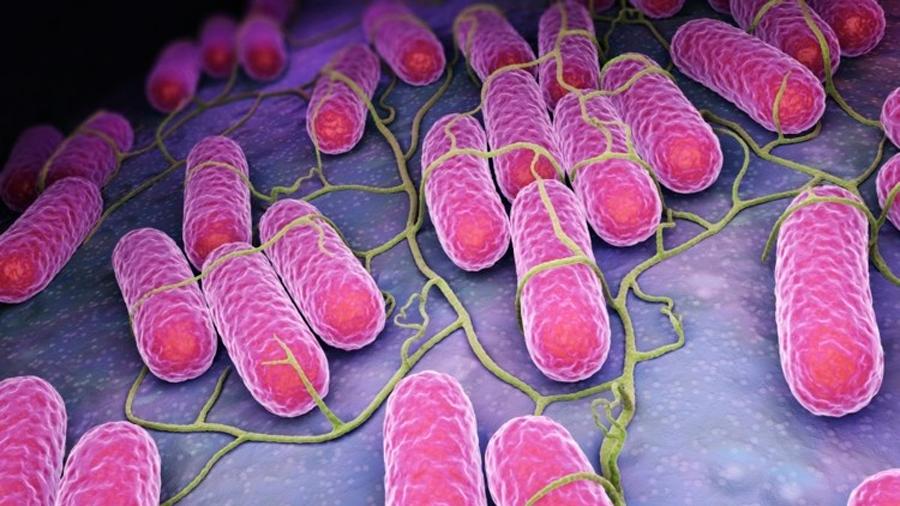 Descrito un mecanismo de control de la salmonela mediante fragmentos pequeños de ARN