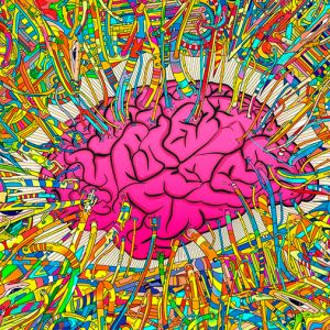 Las drogas psicodélicas también modifican el cerebro