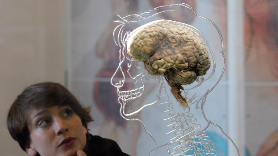 Estudio indica que nuestro coeficiente intelectual se ha reducido en los últimos años