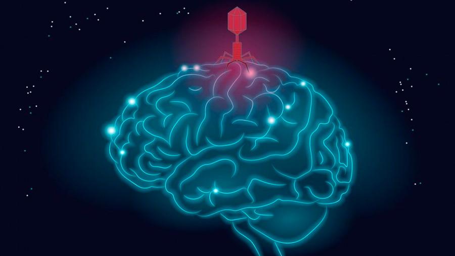 Un nuevo estudio respalda la conexión entre los virus del herpes y el mal de y Alzhéimer