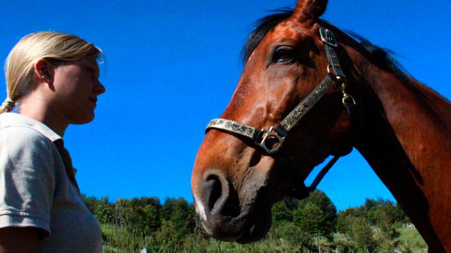 Los caballos perciben señales emocionales humanas de la cara y la voz
