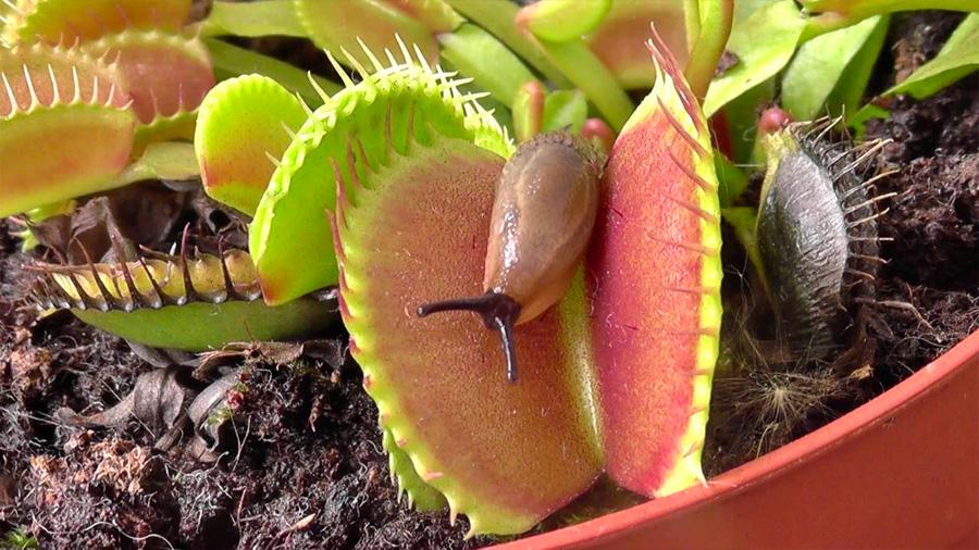 Las plantas ven, recuerdan y gritan cuando las cortas: su vida secreta al descubierto