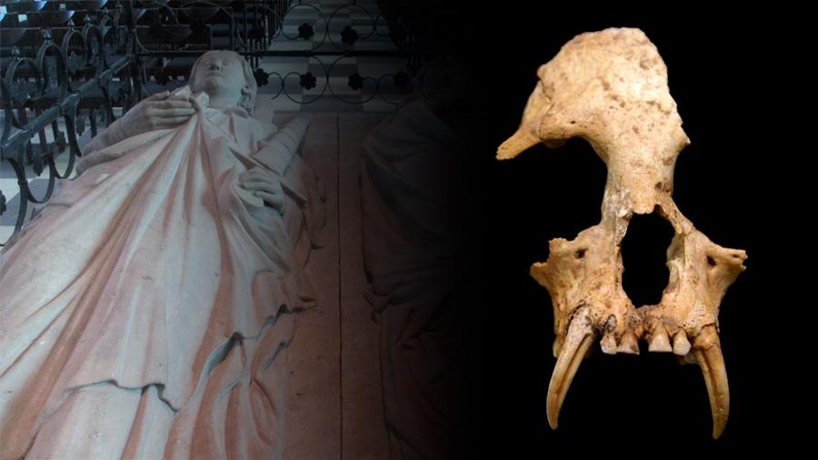 Descubren un simio extinto en la tumba de la abuela del primer emperador chino