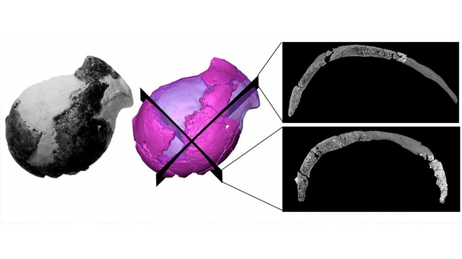 Sorprendentes similitudes de un cráneo homínino (hace 4 millones de años) con el humano moderno