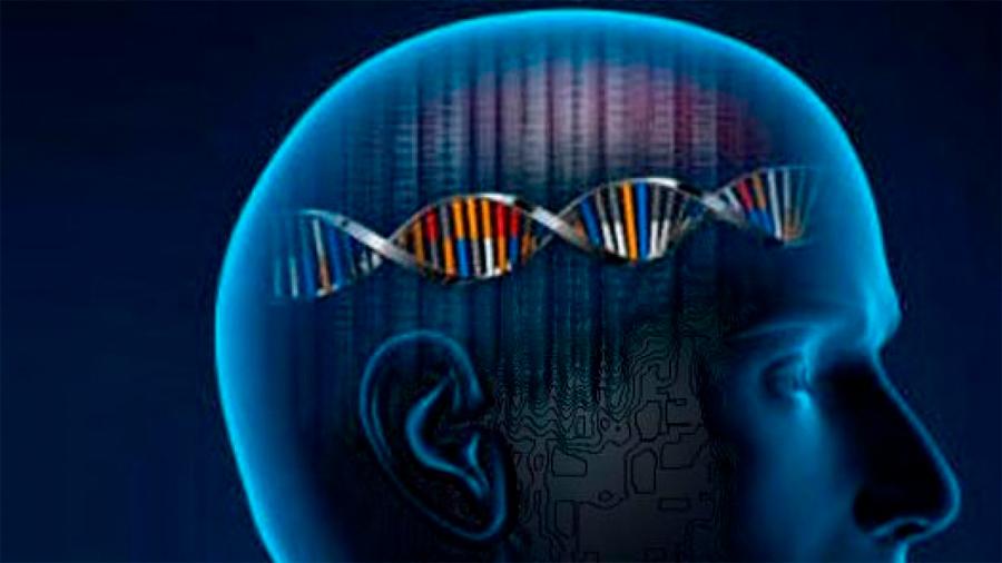 Más de mil genes están asociados a la inteligencia