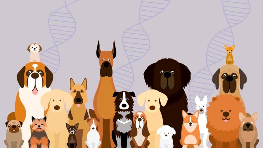 Encuentran el matiz del ADN que hizo del perro nuestro mejor amigo