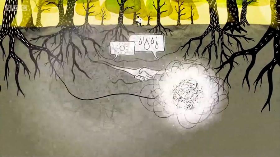 Una extraordinaria red oculta que permite a los árboles ayudarse o atacarse entre sí