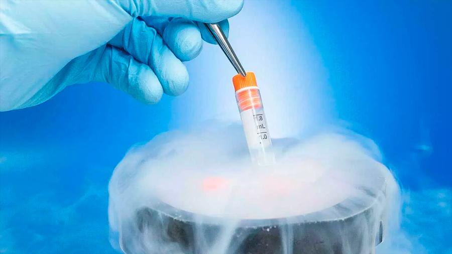 Solo el 7% de quienes congelan sus óvulos buscan después un embarazo