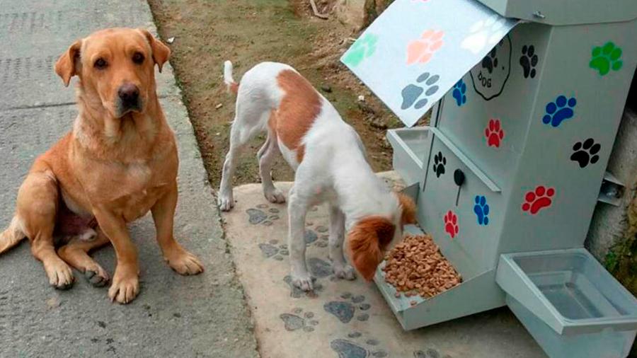 Científico mexicano desarrolló hamburguesa anticonceptiva para perros