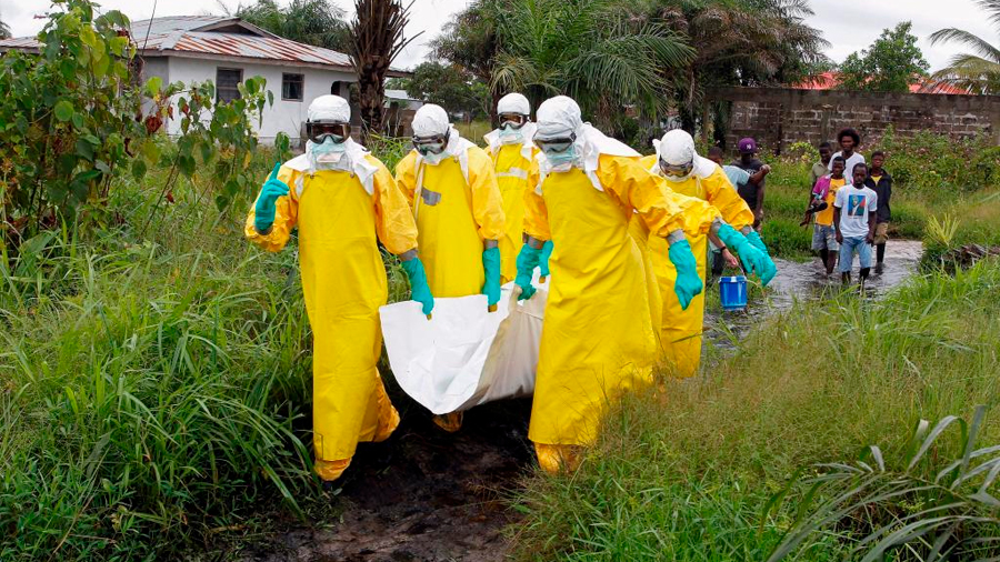 Científicos españoles desarman virus del ébola con un anticuerpo 'unicornio' de tres supervivientes