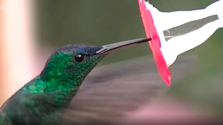 Cómo un científico colombiano y una flor artificial ayudaron a descifrar el enigma de los colibríes