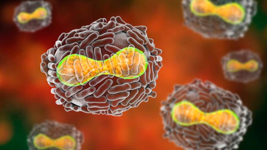EU aprueba el primer medicamento contra la viruela, por si el virus es usado en un ataque terrorista