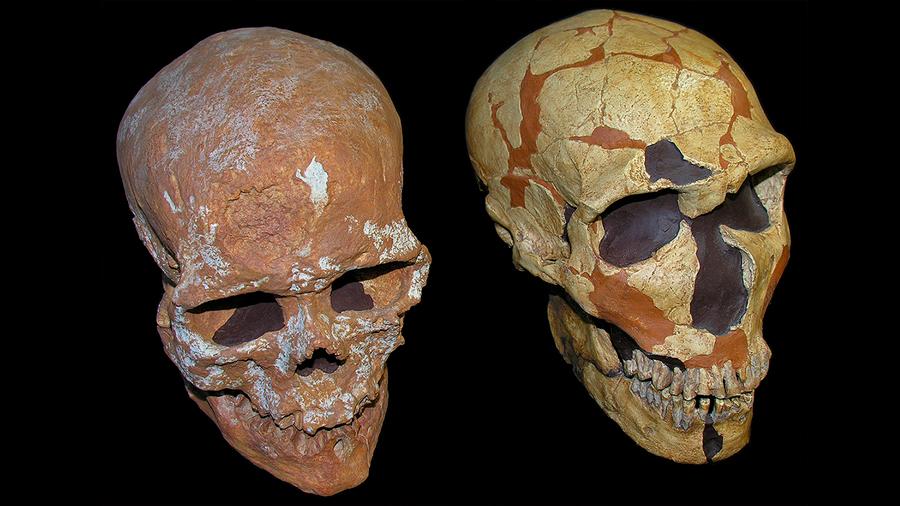 Un cráneo revela nueva información del sistema visual neandertal