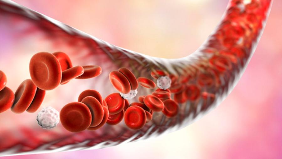 Descubren la manera de reducir daños a vasos sanguíneos en la diabetes