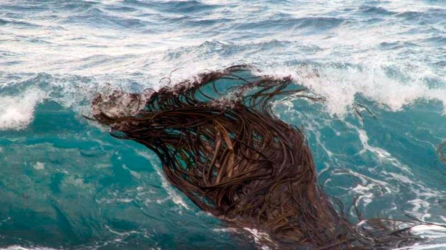 Descubren que algas alcanzan la Antártida tras recorrer 20 mil kilómetros