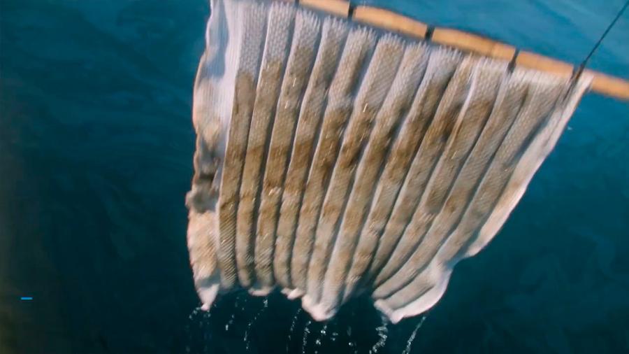 Prueban con éxito una esponja que limpia vertidos de petróleo