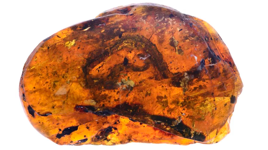 Descubren el primer fósil conocido de serpiente de la era de los dinosaurios en un terrón de ámbar