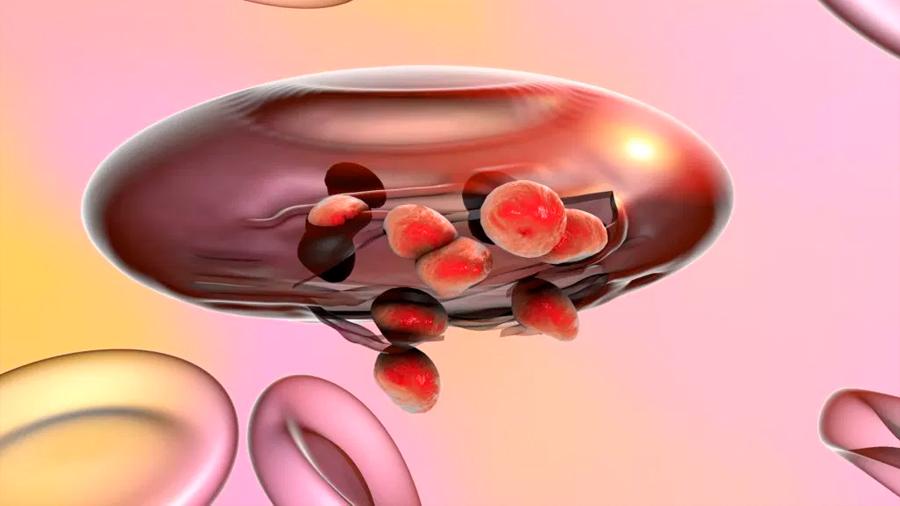 Desvelan cómo el parásito causante de la malaria humana regula los genes implicados en su virulencia