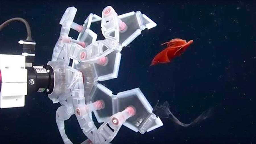 Se inspiran en el origami para capturar sin daño frágiles seres marinos, via dispositivo plegable