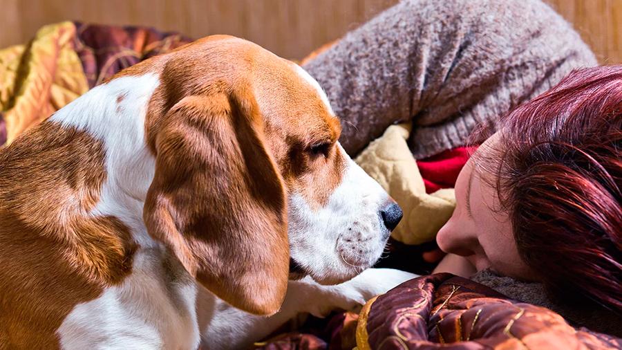Demuestran que los perros actúan rápido para consolar a sus dueños cuando están tristes