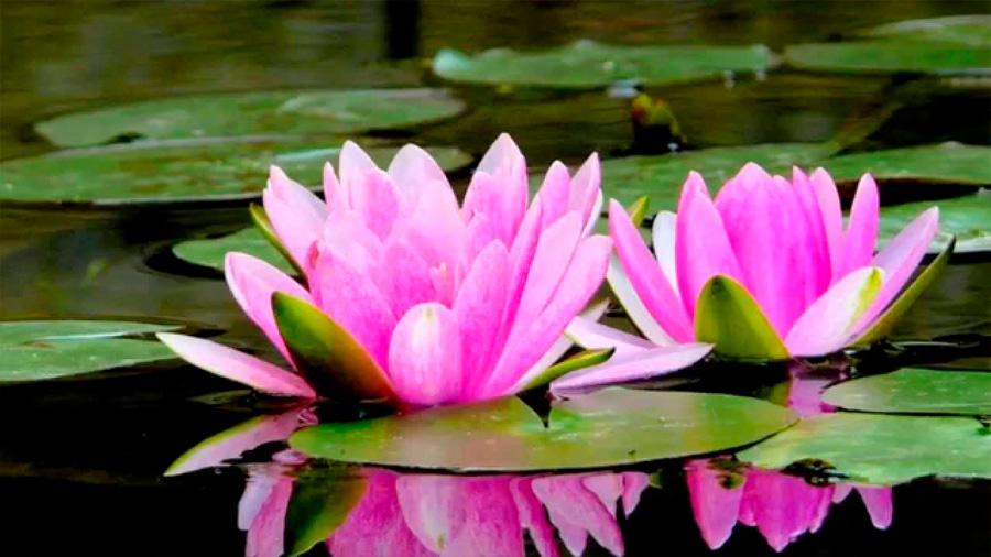 Entérate de las propiedades que se atribuyen a 7 plantas consideradas sagradas en el orbe