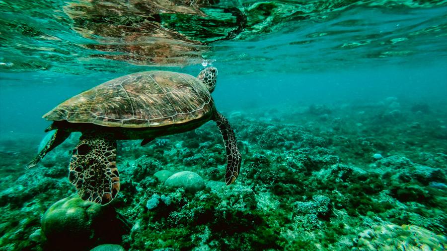 Solo un 13% de los océanos del mundo permanece salvaje