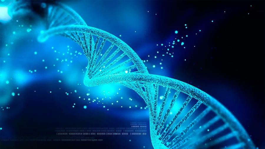 """Piezas de ADN """"basura"""" serían interruptores que activan y desactivan genes"""