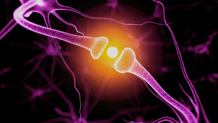 La formación de neuronas depende de un impulso eléctrico